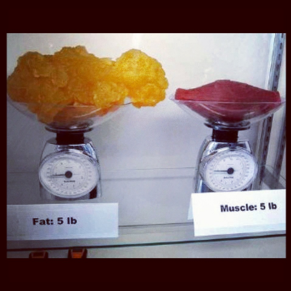 What does 1lb of fat look like